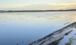 Ongeloof en woede onder agrariërs. Hoogheemraadschap zet de waterberging amper tot niet open tijdens het noodweer, percelen lopen onder. 'Ze zijn 100 procent schuldig aan alle schade'