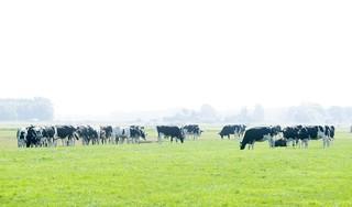 Honderden meldingen van verontwaardigde burgers over vee in de verzengende hitte zonder een spatje schaduw