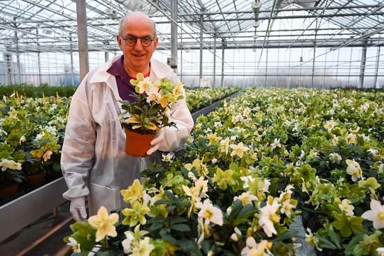 Andijker Har Stemkens veertig jaar veredelaar bij Syngenta Flowers in Enkhuizen: Dansend tussen de bloemen