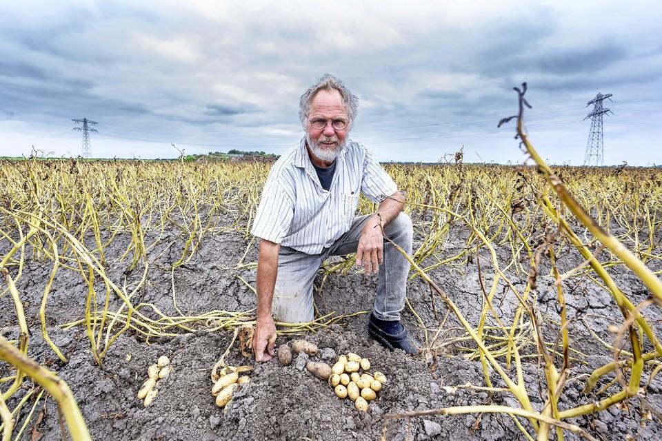 Jan Knook teelt biologische pootaardappelen. Door het branden van de plant zijn de aardappels kleiner.